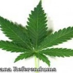 marijuana referendums