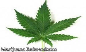 marijuana referendums