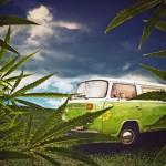CA County Bans Outdoor Medical Marijuana Grows – NOT