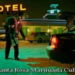 Recent Kidnapping May be Related to Illegal Santa Rosa Marijuana Cultivation and Sales