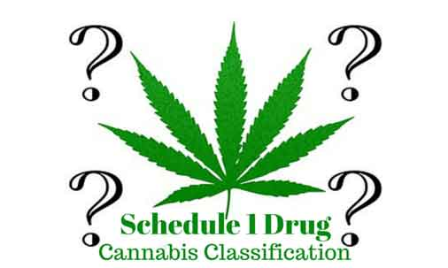 Cannabis Classification